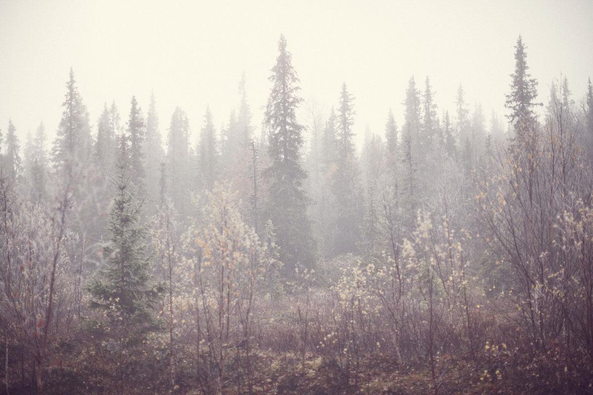 dimma ligger öven höstig fjällskog
