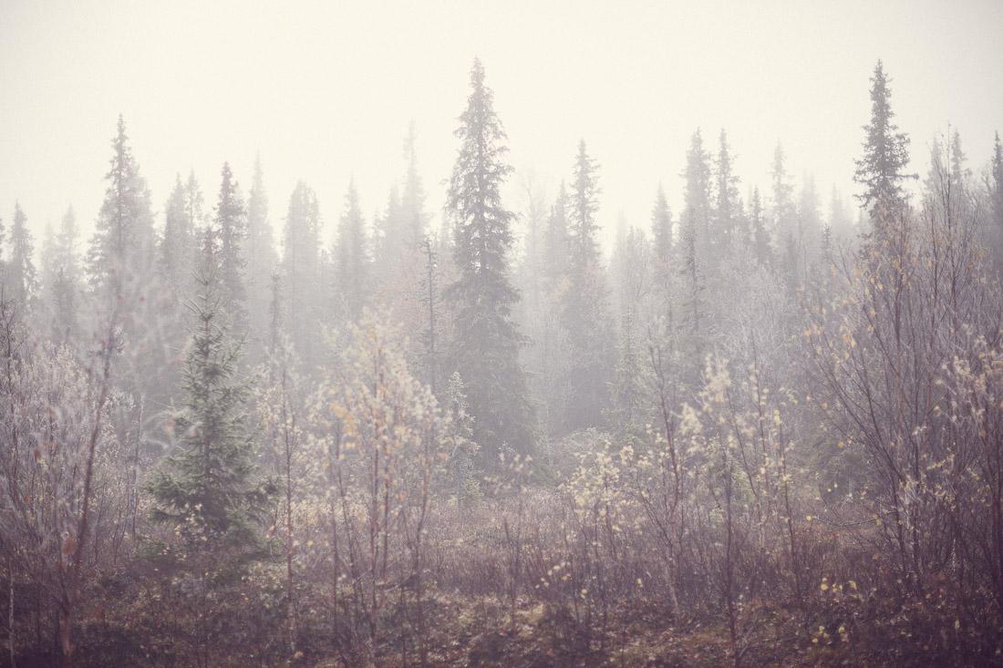 Fjällskog på hösten