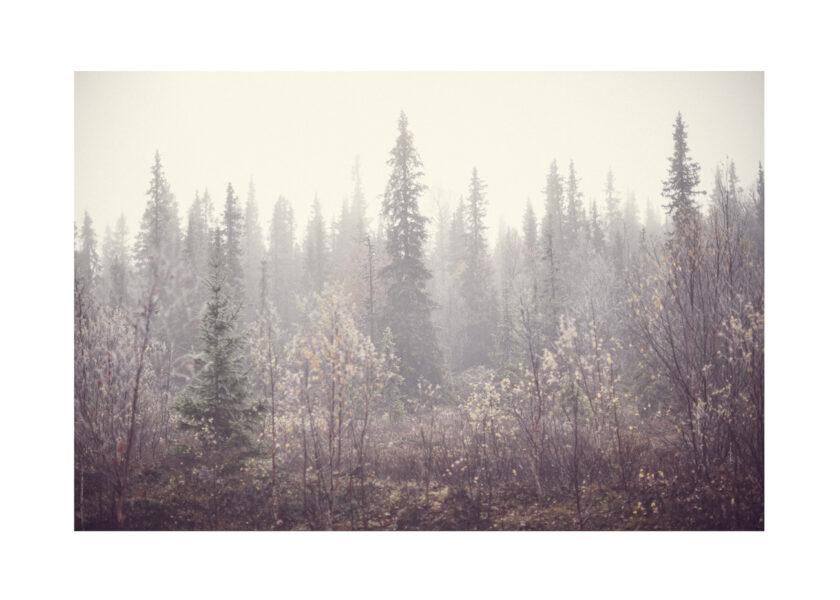 fjällskog fotograferad på hösten