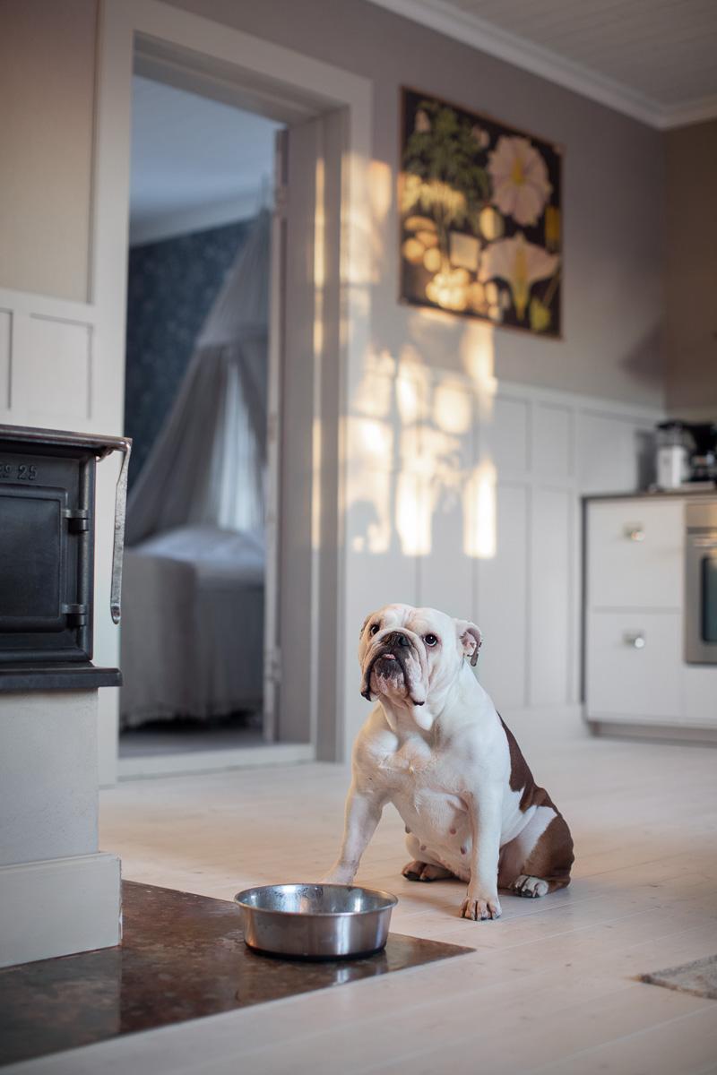 Hunden Eda sitter på golvet vid sin matskål