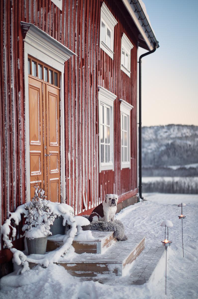 En hund sitter på trappan framför ett gammalt rött trähus med i tidningen sköna hem
